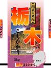 栃木県産 コシヒカリ